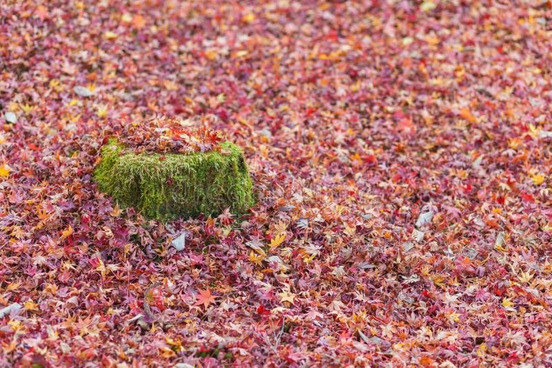 Höstfärgändring är säsongen som är färgrik, med röda och gula sidasuppleanter, härlig naturmoutainbakgrund i Eikando vikarier fotografering för bildbyråer
