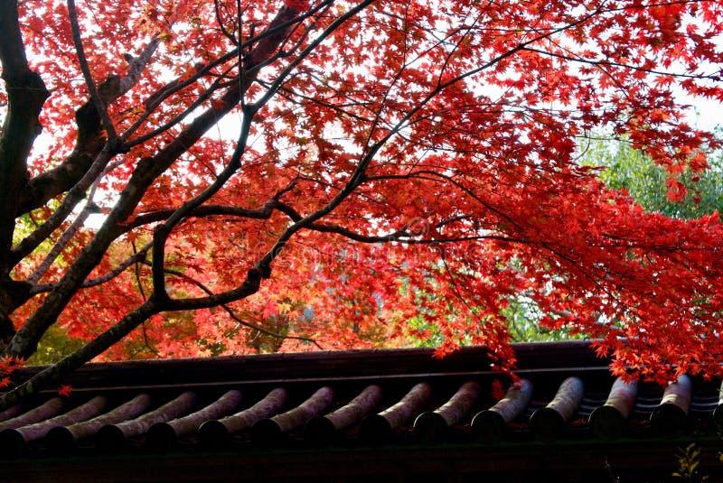 Höstfärg i Kyoto royaltyfri bild