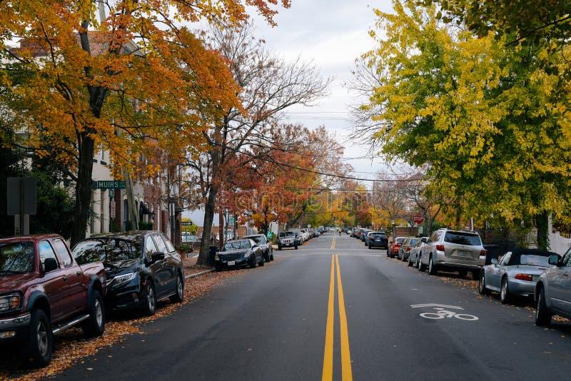 Höstfärg på en gata i den gamla staden Alexandria, Virginia royaltyfria bilder