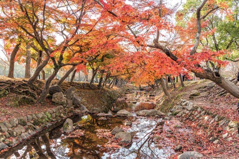 Höstfärger av sidor av träd ovanför liten ström arkivfoton