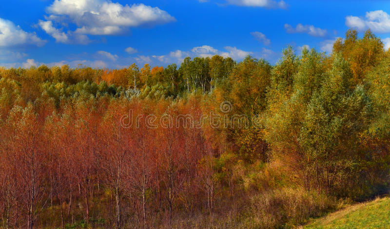 Höstfärger av skogen arkivfoto