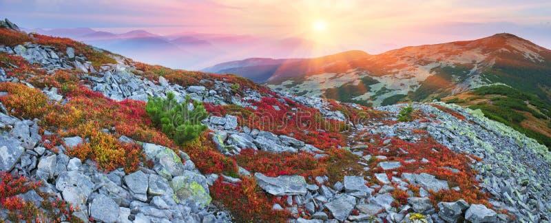 Höstfärger i Carpathiansna fotografering för bildbyråer