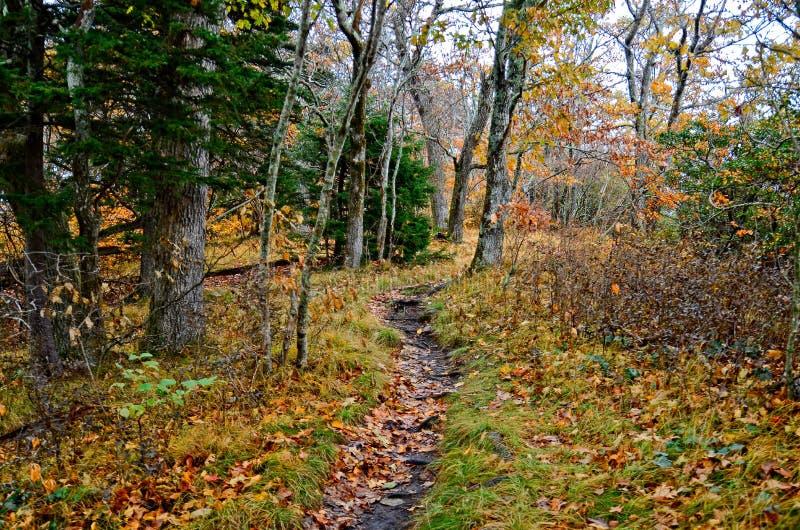 Höstfärger i skogen på ett vandringsspår arkivfoto