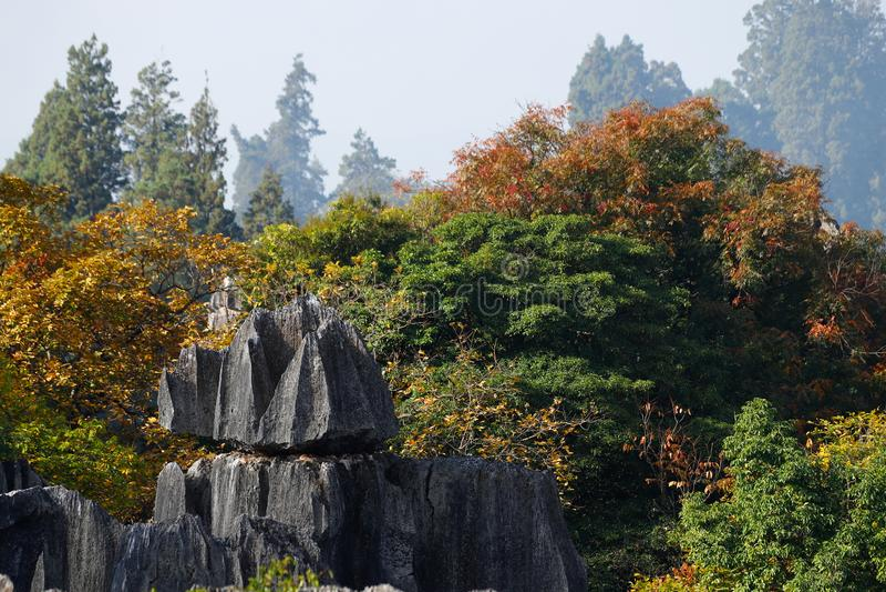 Höstfärger i stenskoglandskapet i Yunnan, Kina arkivfoto