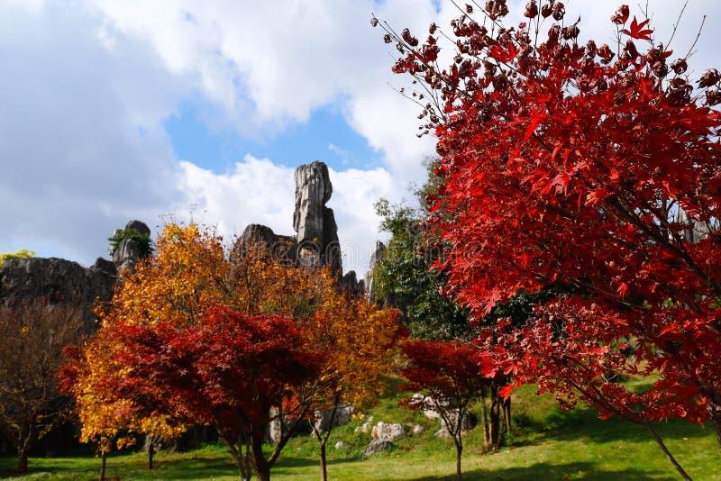Höstfärger i stenskoglandskapet i Yunnan, Kina arkivbild