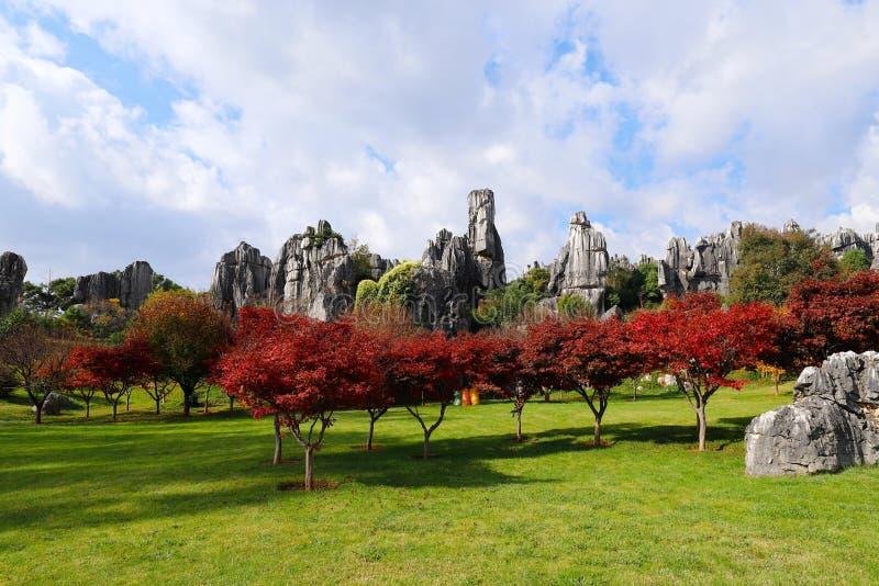Höstfärger i stenskoglandskapet i Yunnan, Kina royaltyfri bild