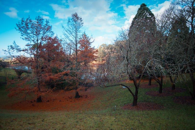 Höstfärger på upphöjda botaniska trädgårdar för montering fotografering för bildbyråer