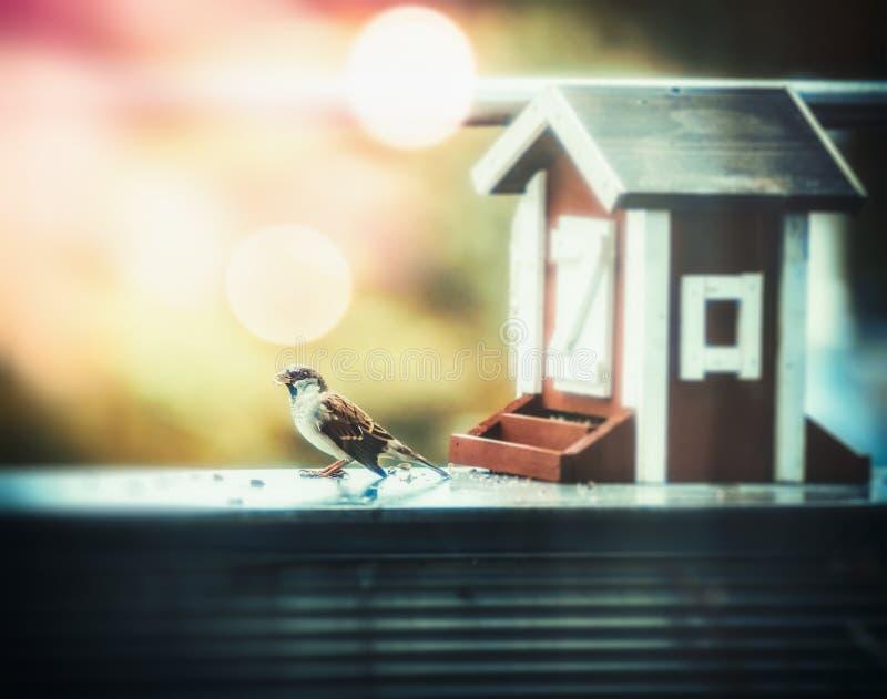 Höstfågelförlagematare i form av hus och sparven på balkongen, solljus, bokeh arkivbild