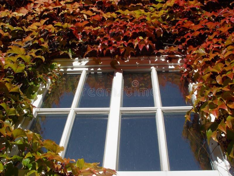 Download Höstfönster arkivfoto. Bild av leaves, wine, brigham, rött - 25936