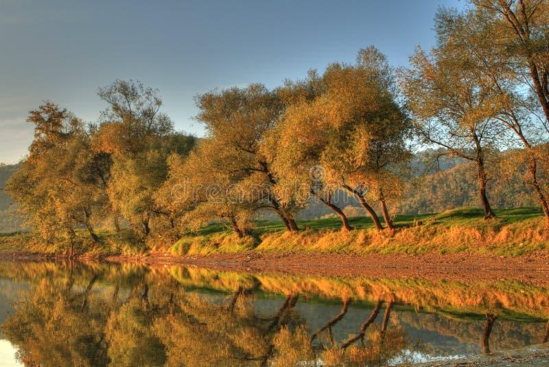 höstfalltrees arkivfoto