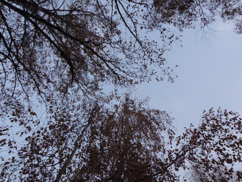 Höstfilialer av träd i den blåa himlen arkivbild