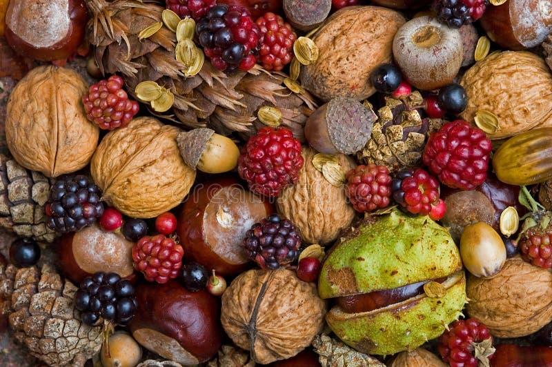 höstfrukter arkivfoto