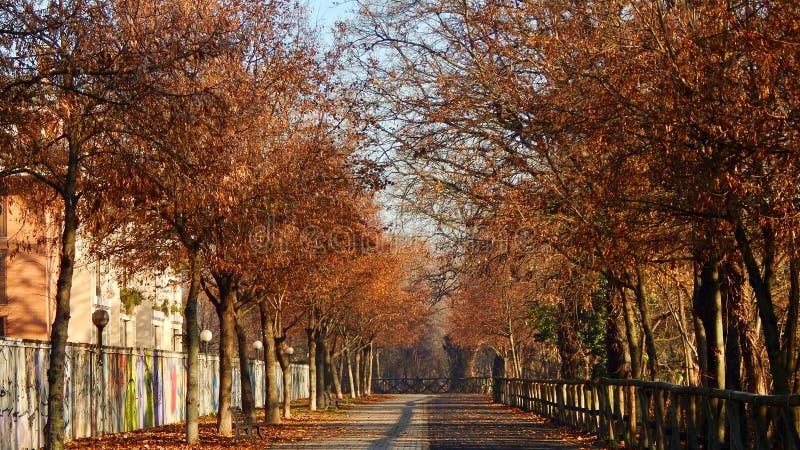 Höstgata med träd fotografering för bildbyråer