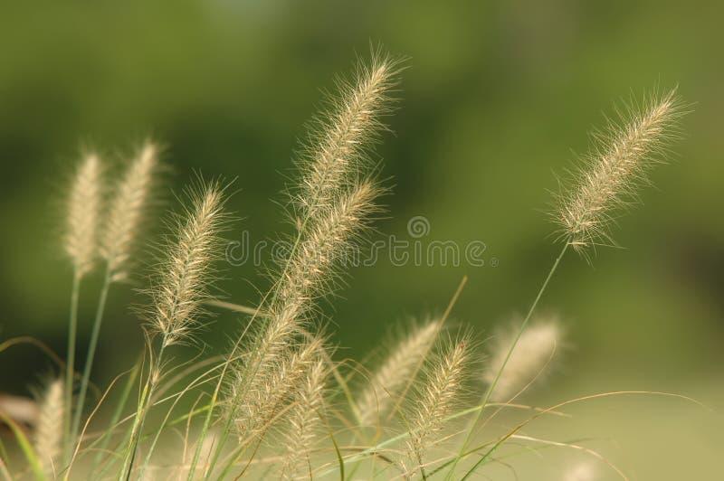 höstgräs royaltyfri fotografi