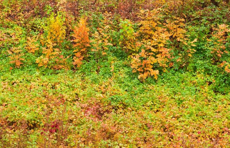 Höstgräs och sidor efter regn som bakgrund royaltyfri fotografi