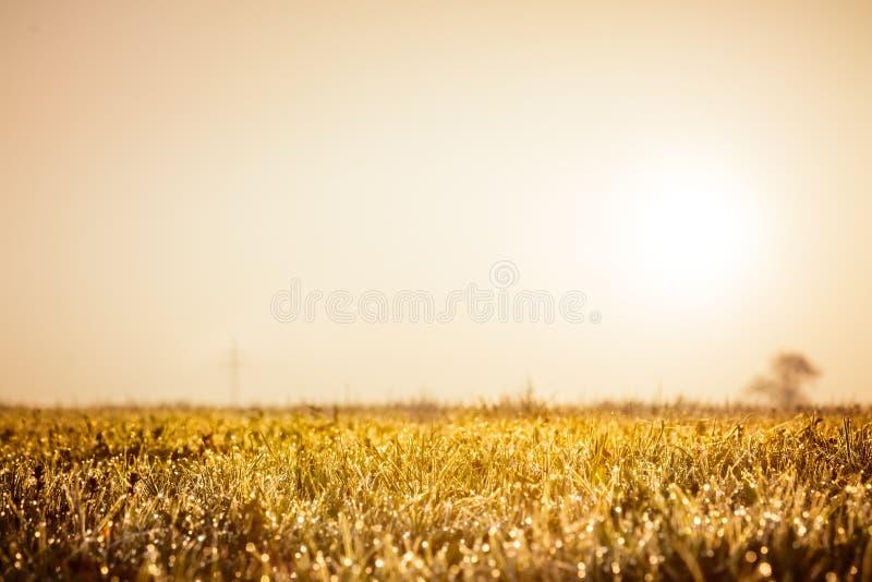 Höstgräsfältet, det guld- begreppet för naturabstrakt begreppbakgrund, den mjuka fokusen, bokeh, värme signaler royaltyfria bilder