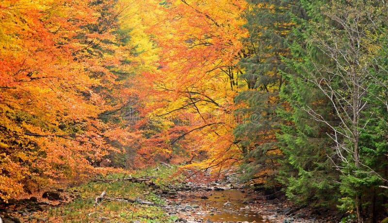 höstgruppen colours tysk yellow för rhine flodtree royaltyfri foto