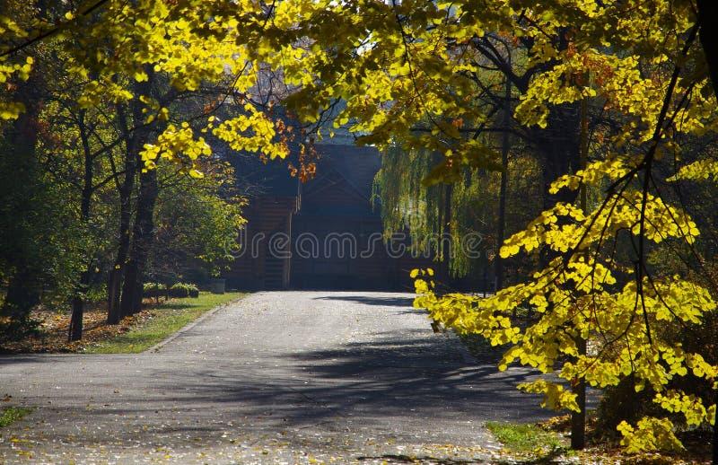 Download Höstgulingen lämnar arkivfoto. Bild av textur, leaf, trees - 78728754