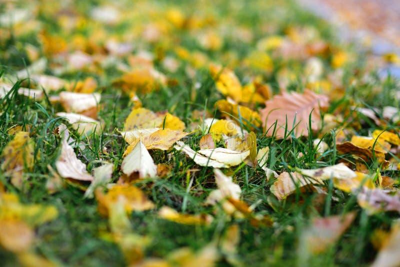 Höstgulingen lämnar på grönt gräs royaltyfri foto