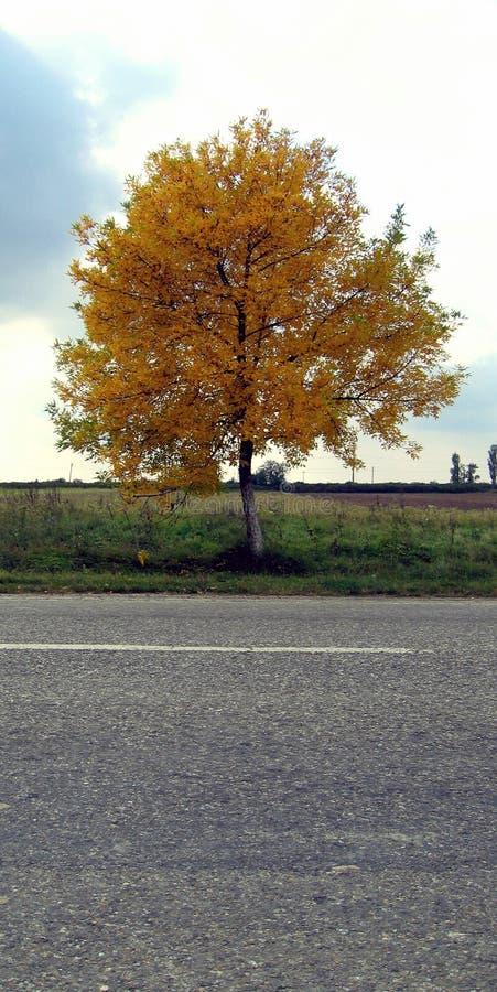 hösthuvudväg arkivfoto