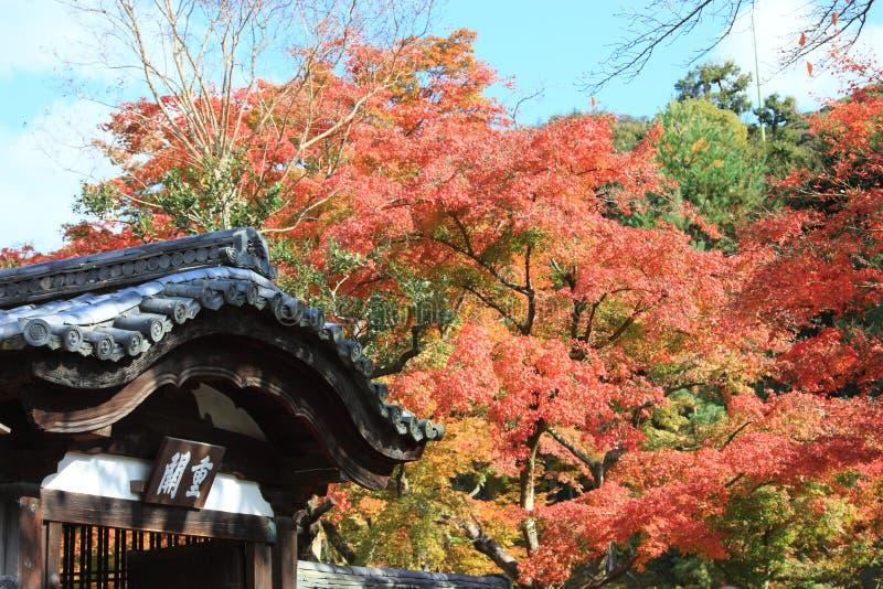 höstkyoto tempel royaltyfri fotografi