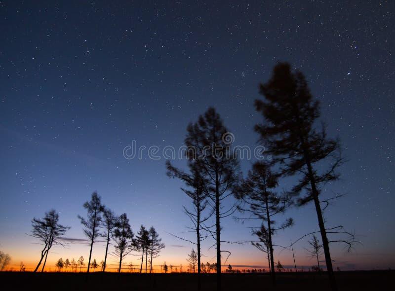 Höstlärker under stjärnklar himmel på soluppgång arkivbilder
