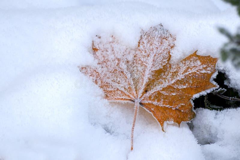 Höstlönnlöv med iskristaller i snön, kopieringsutrymme royaltyfri foto