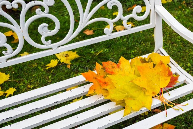 Höstlönnlöv på träbänk parkerar in Glömd bukett av ljust färgrikt rött som är orange, gulingsidor royaltyfri fotografi