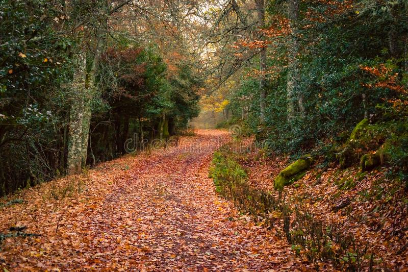Höstlandskap av en väg med bruna stupade sidor royaltyfri fotografi