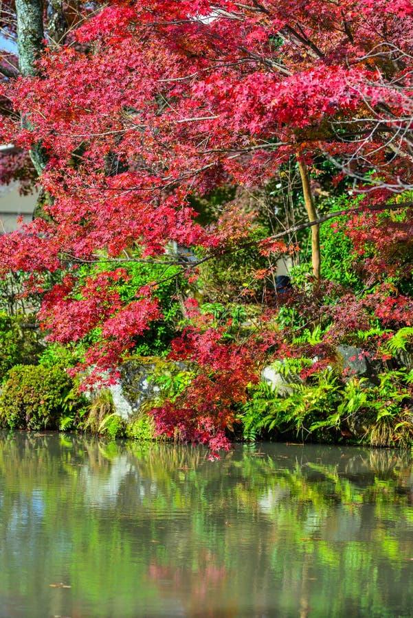 Höstlandskap av Kyoto, Japan royaltyfria foton