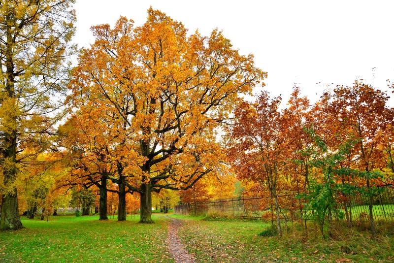 Höstlandskap - bana i parkera under ett träd med den gula betesmarken arkivfoton