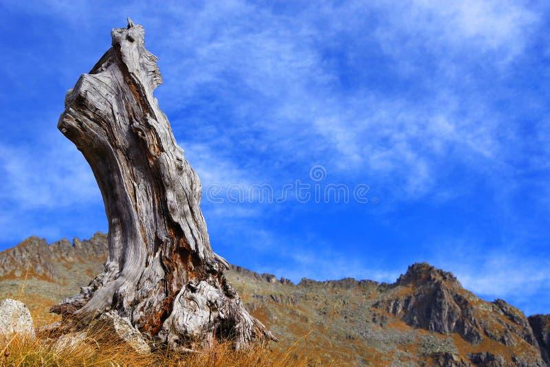 Höstlandskap i Adamello - Presanella alpin grupp i en härlig dag arkivbilder