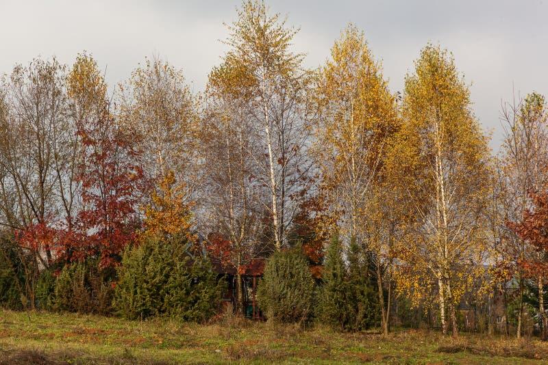 Höstlandskap i Carpathiansna fotografering för bildbyråer