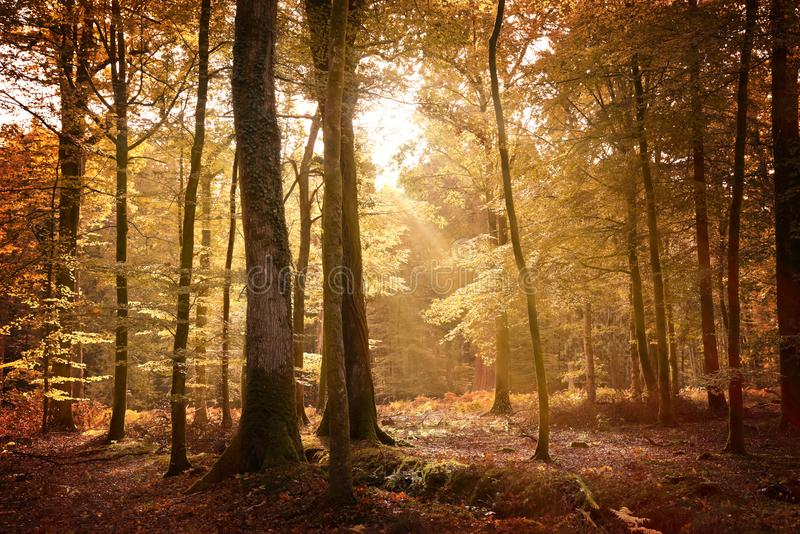 Höstlandskap i den nya skogen royaltyfria bilder