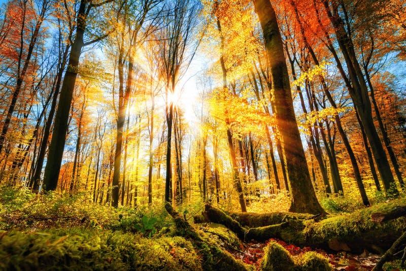 Höstlandskap i färgrik solig skog royaltyfria foton