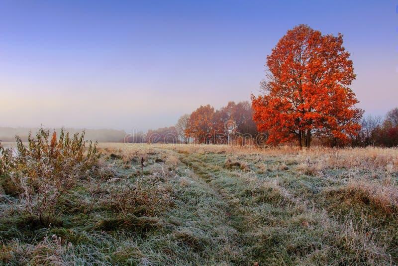 Höstlandskap i morgonen på frostig äng med det färgrika trädet Landskaphöstäng med rimfrost på gräs fotografering för bildbyråer