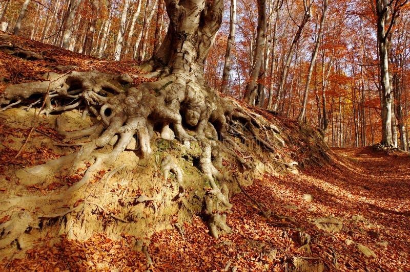 Höstlandskap i skogen royaltyfri bild