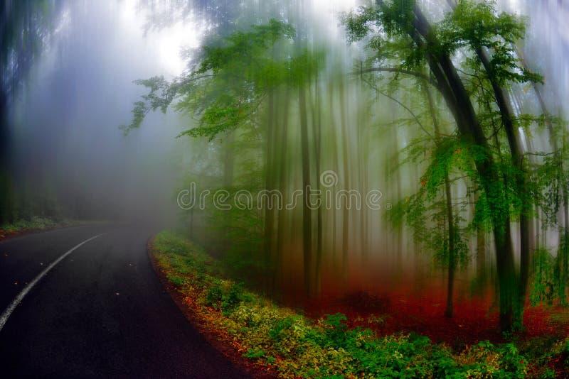 Höstlandskap i skogen royaltyfri foto