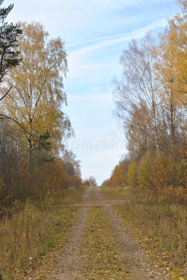 Download Höstlandskap: Landsväg Mellan Gula Björkar Fotografering för Bildbyråer - Bild av tree, russia: 78728111