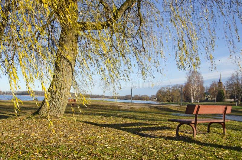 Höstlandskap med bänken och trädet royaltyfri fotografi
