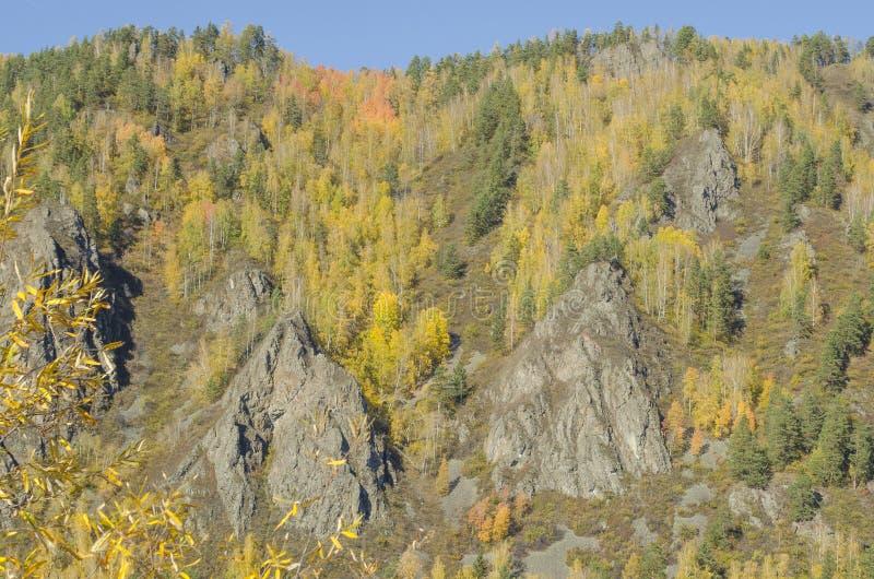 Höstlandskap med den ljusa färgskogen på banken av lutningen i höstsidor royaltyfria bilder