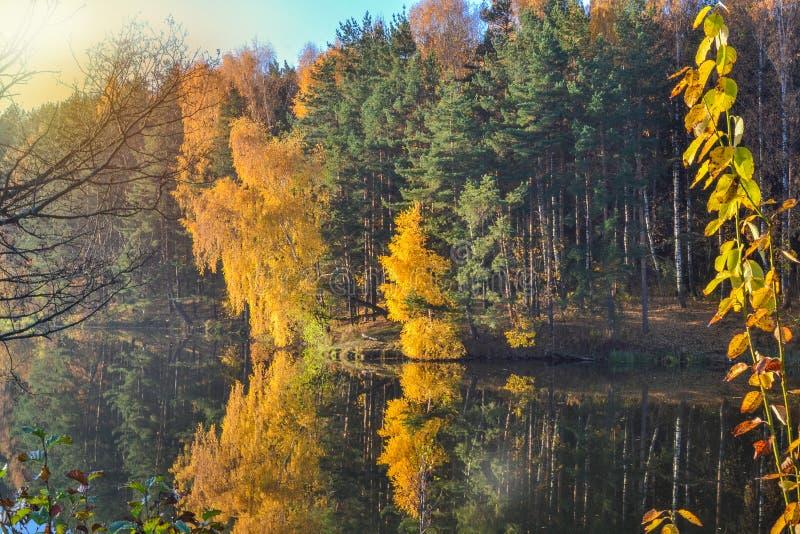 Höstlandskap med färgrik lövverk för färgrik skog över sjön med härliga skogar i röda och gula färger Höstför royaltyfri foto
