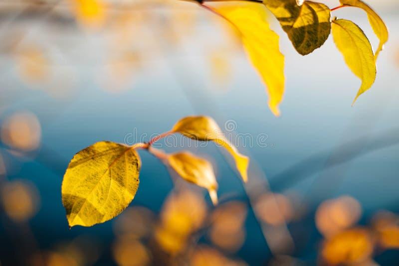 Höstlandskap med gulingsidor på en bakgrund för blått vatten royaltyfri fotografi