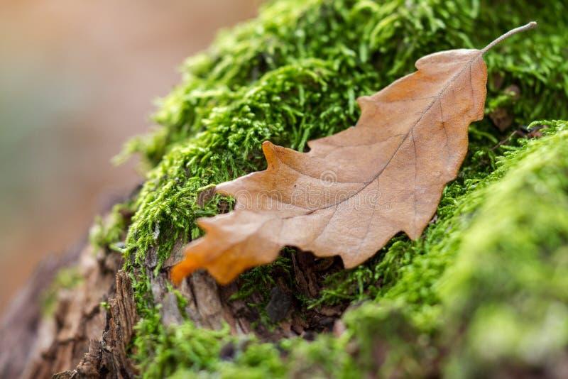Höstlandskap med mossa på ett trä och sidor arkivfoto