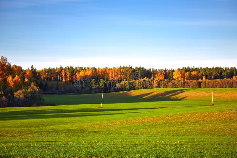 Höstlandskap med träd och fältet royaltyfria foton