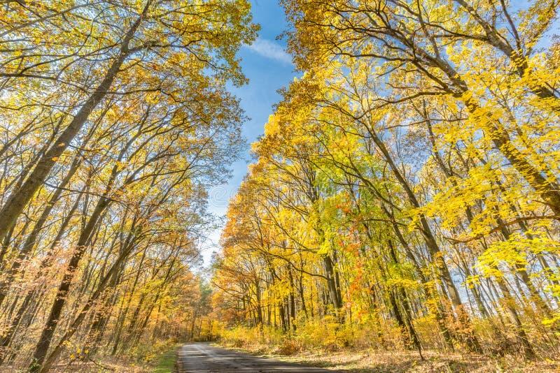 Höstlandskap med vägen och härliga kulöra träd royaltyfria foton