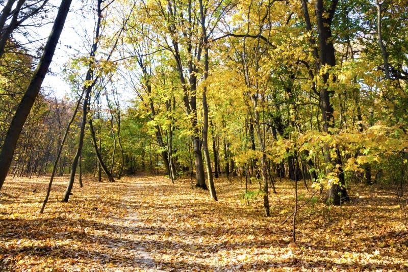 Höstlandskap Walkway i den decimala skogen på en soldag i höst royaltyfri bild