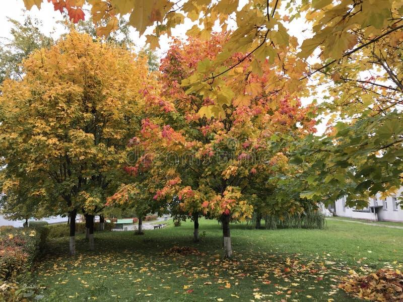 Höstlandskapet i staden parkerar Träd med sidor av rött och gult står ut mot bakgrunden av grönt gräs med stupat royaltyfri bild