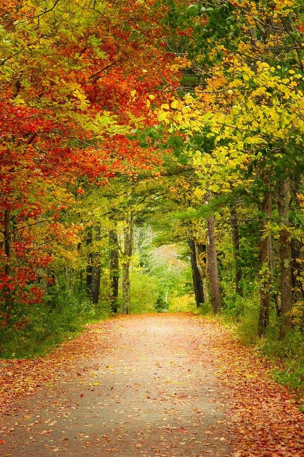 Höstlandsväg i Maine New England arkivfoto