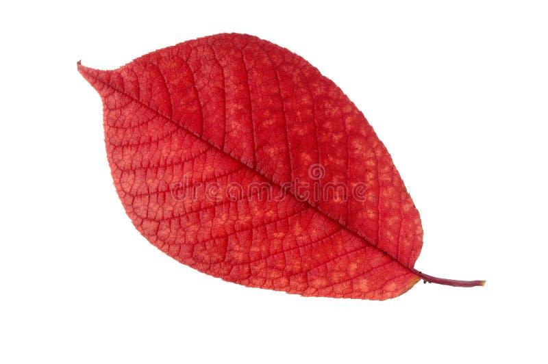 Download Höstleaf arkivfoto. Bild av tree, naturligt, bana, medf8ort - 278904
